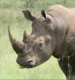 No contribution too small – every little bit helps the rhinos!