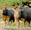 RHINO CONSERVATION AWARD ANNOUNCED