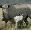 Update on rhino poaching statistics (2 October 2012)