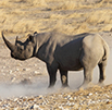 R 6 Million to fight rhino poaching!!!