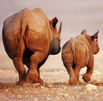 RHINO CONSERVATION AWARDS RECOGNISE PRESERVATION EFFORTS