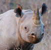 Convicted rhino poachers sentenced