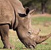 WORLD RHINO DAY MEDIA ANNOUNCEMENT 21/09/2014